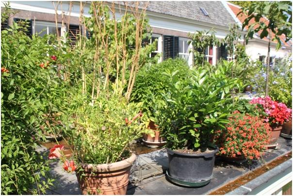 daktuin-met-60-planten2