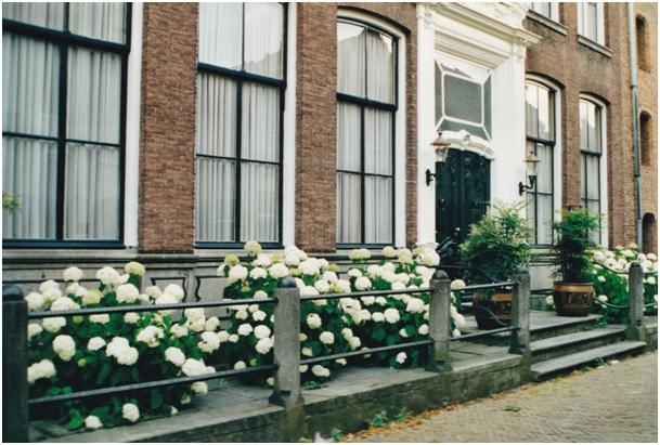 ruiterstraat 10 bloemen