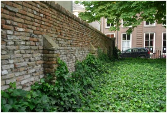 de muur tussen ruiterstraat 14 en ruiterstraat 12