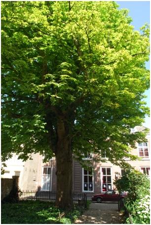 kastanjeboom ruiterstraat 14